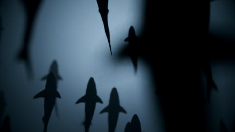 4K Shark Silhouettes Passing Overhead Footage