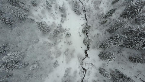 Aerial view of winter spruce snowy forest. Low flight over a river and pine ビデオ