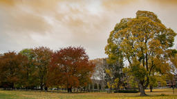 Autumn tree time lapse with cloudy sky. Bright yellow and red leaves blowing int ビデオ