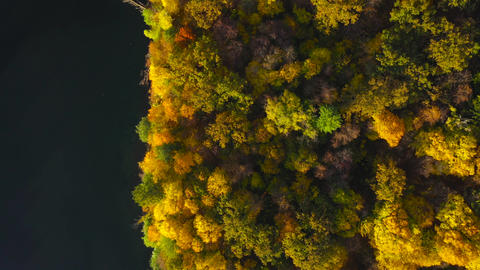 Aerial view of the lake and the bright autumn forest on its shore. Forest is Footage