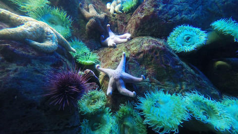 starfish moving in the ocean Live Action