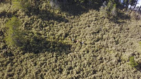 DJI MAVIC 4K Taiwan Aerial Drone Nantou Jun Mountain Jundashan 20181118 2 ビデオ