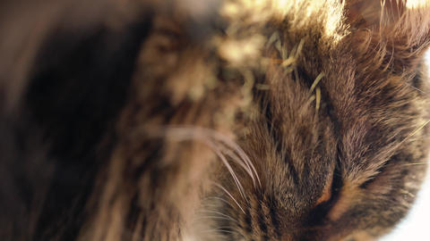 Vertical video. Cute muzzle of a tabby domestic cat that looks in different Live Action
