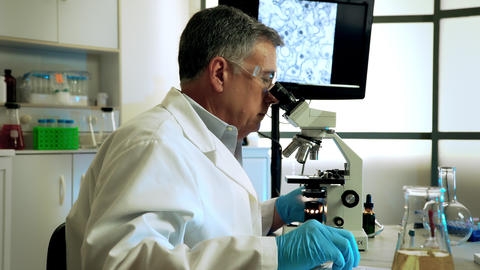 virologist studying mosquito larvae for zika under a microscope Footage