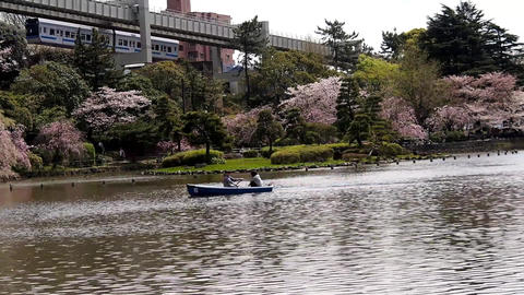 Monorail going over the cherry blossoms in the park ビデオ
