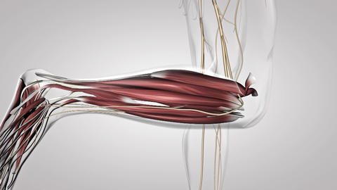 nervous system 4 Live Action