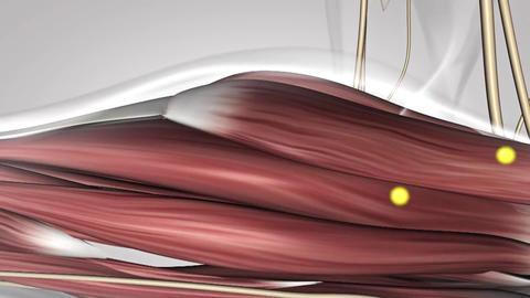 nervous system 6 Footage
