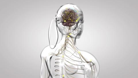 nervous system 1 Footage