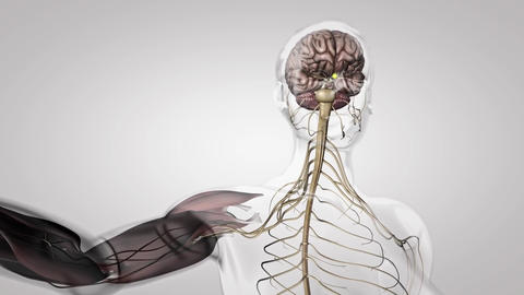 nervous system 2 Live Action