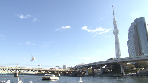 Tokyo skytree and birds and bluesky Footage