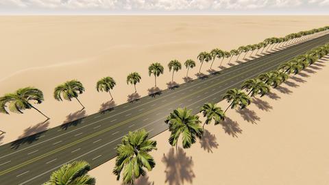 Smooth camera movement through the royal palm alley at desert ビデオ