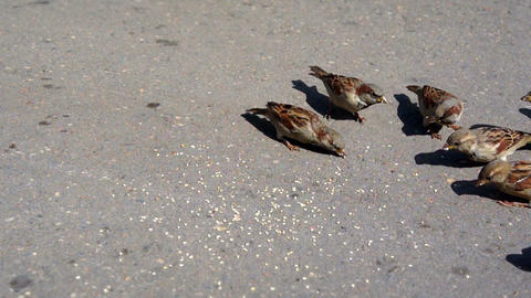 sparrows peck seeds GIF
