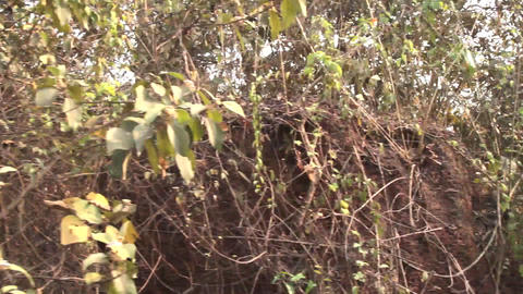 train picks up speed passing by overgrown shrubs and bushes Live Action