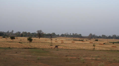 Cropping or crofting agriculture in India Live Action
