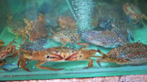 Sea crabs in the aquarium at seafood market, close-up Live Action