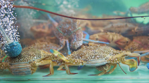 Fresh crabs in clean water fish tank at seafood market Live Action