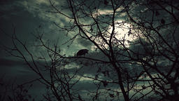 Ravens on the branches at night under full moon Footage