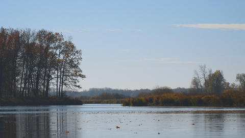 Autumn leaves float on water. Lake or river with quiet water in the autumn Footage