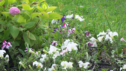Different flowers on the flower bed in the Park Stock Video Footage