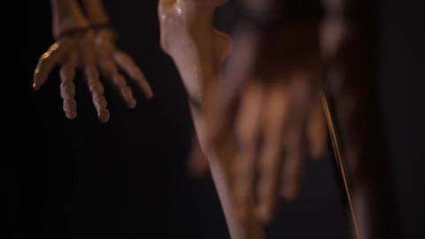 model of human skeleton Footage