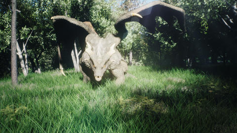 A big dragon flew over the forest and landed searching for his enemies. 3D Animation