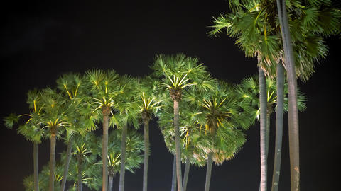 Palm trees and tropical breeze at night sky background, close-up Live Action