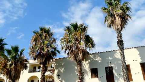 Palm trees in Alghero seafront Archivo