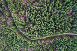 Road in evergreen forest, drone view Fotografía