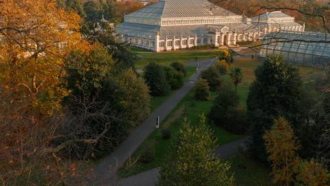 Kew Gardens, London, England, UK Footage