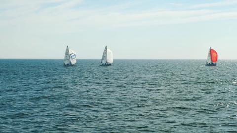 Sailboats at sea with horizon Live Action