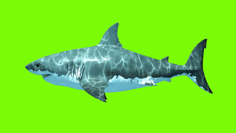 Great White Shark Megalodon on a green background Stock Video Footage
