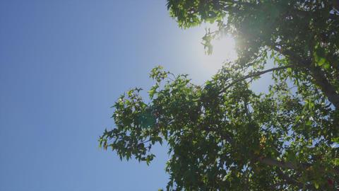 Tree Sun Bright Footage
