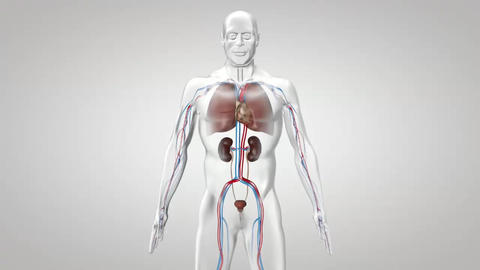 Human Body Energy System Footage