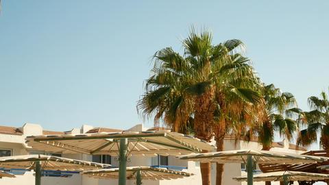 Beach umbrella and palm tree near pool Live Action