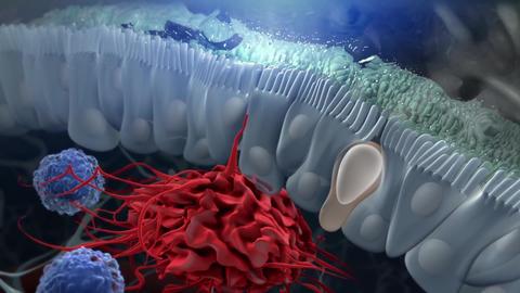 Innate lymphoid cells cut 005 Footage
