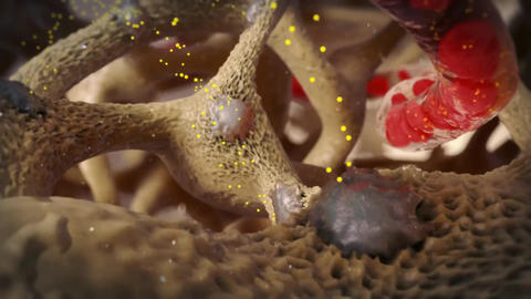 Osteoclast Breaking Down Bone Tissue Live Action