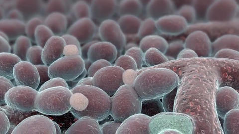 The cell is the basic unit of life. All organisms are made up of cells Live Action