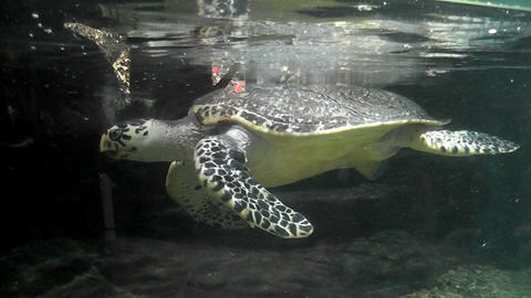 Turtle in an aquarium city zoo ビデオ