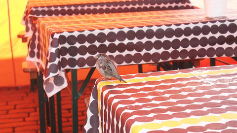 Sparrows arrive in a street cafe Live Action