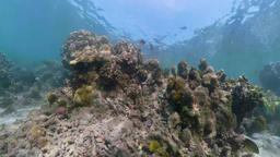 Coral reef and tropical fish vr360 Footage