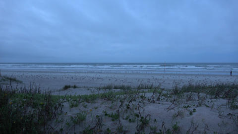 Daytona Beach - sandy beach and dunes in the evening Live Action