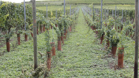 world famous wine industry of France Footage
