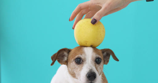 Woman balancing apple on head of dog Archivo