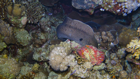 A giant moray eel Archivo