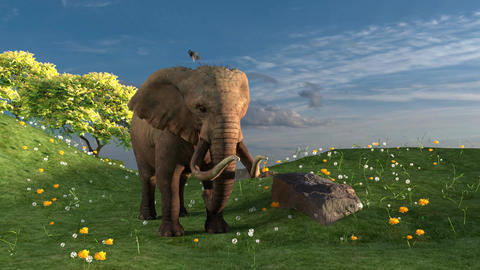 Elephant isolated in a field Animation