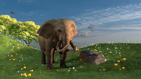 Elephant isolated in a field Stock Video Footage