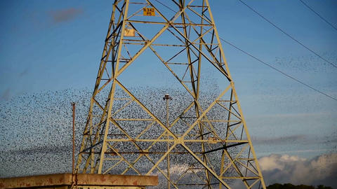 Flock of starlings flying by an electricity pylon in the countryside at sunset ビデオ