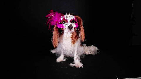 Dog party mask carnival cloth cute pet costume wear wearing Footage