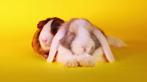 Animal pet friends friendship. Cute animals together Live Action