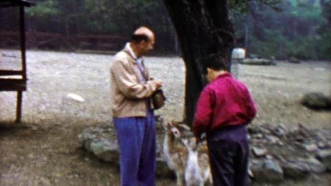 1961: Dad son feeding cute baby fawn deer at Pocono Wild Animal Farm Footage
